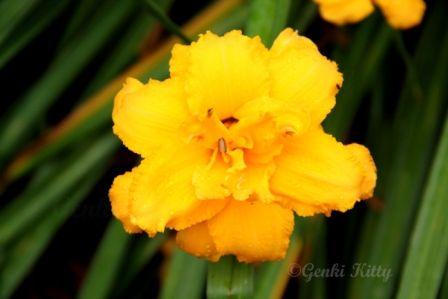 Huntsville Botanical Gardens, Alabama, USA.  #gardens #alabama