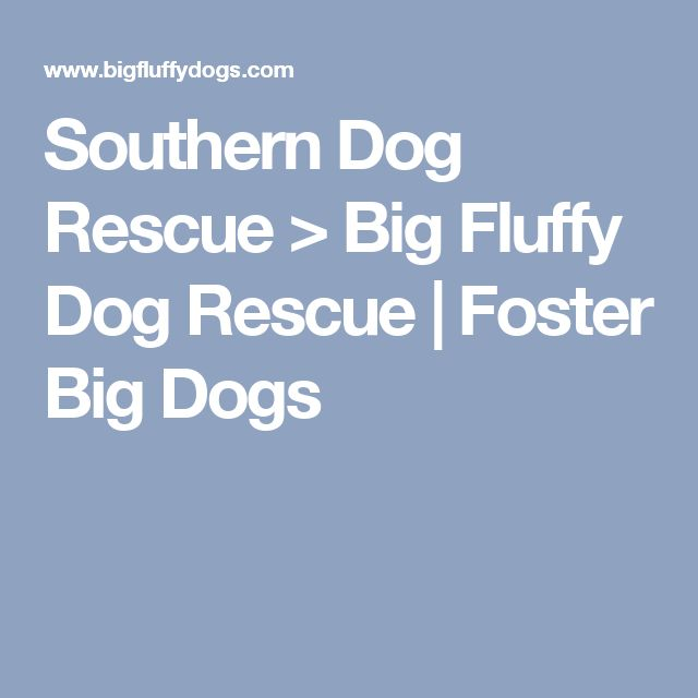 Southern Dog Rescue > Big Fluffy Dog Rescue   Foster Big Dogs
