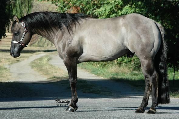 121 best images about i heart horses on pinterest oldenburg dressage and arabian horses. Black Bedroom Furniture Sets. Home Design Ideas