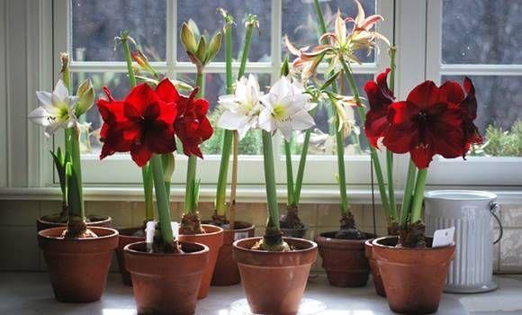 3 virág, ami a legmérgezőbb az összes közül,de mi mégis bent tartjuk őket!