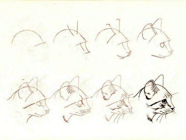 уроки рисования кошки
