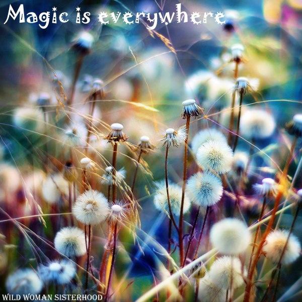 magic is everywhere!