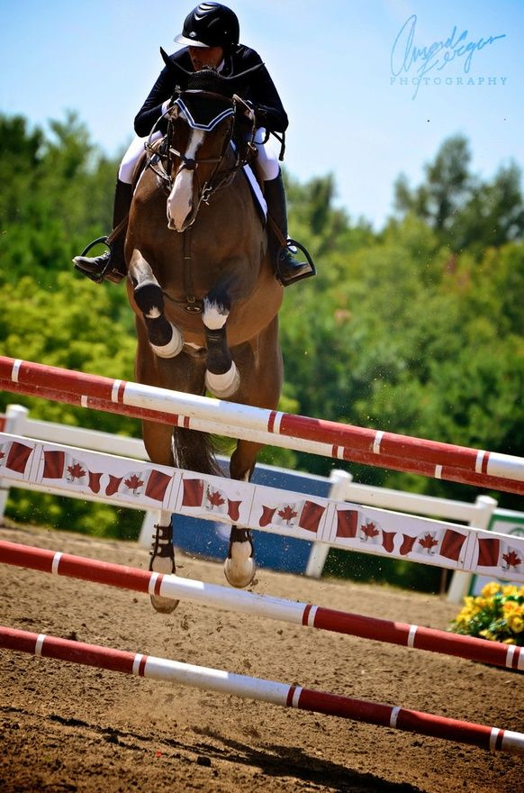 21 Best Gpa Images On Pinterest Equestrian Horse And Horses