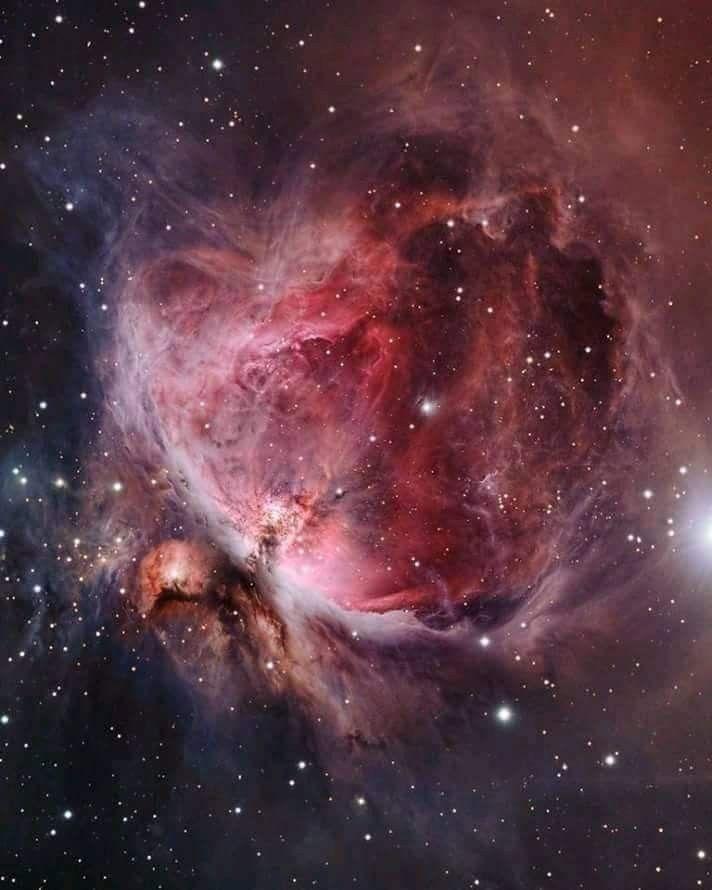 orion nebula tattoo - 712×890