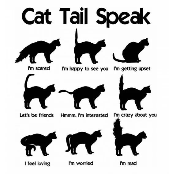 Cat Ear Positions Meaning