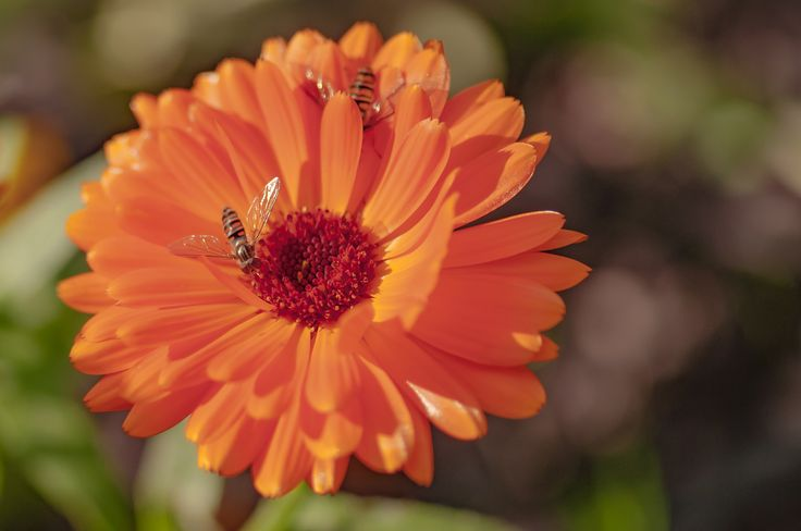orange party by Graziella Serra Art & Photo on 500px