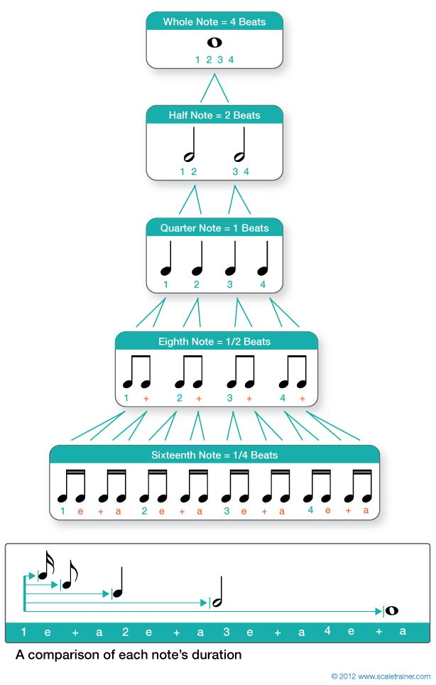 Musical Rhythm note values....will definitely print and post in my classroom!