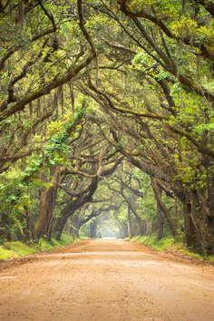 If you want to see the South Carolina coast the way the original settlers did, take a step back in time at Botany Bay Plantation Heritage Preserveon Edisto Island. The 4,600-acre preserve includes almost three miles of undeveloped, breathtaking beachfront that you'll never forget.    Located approximately 45 miles south of Charleston just off SC Hwy. 174, this wildlife management area exhibits many characteristics common to sea islands along the southeast coast: pine hardwood forests…