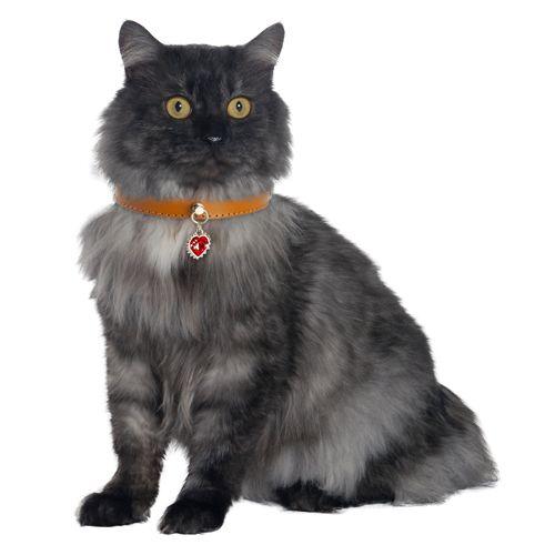 112 best les chats top cat model images on pinterest - Cuisiner le collier d agneau ...
