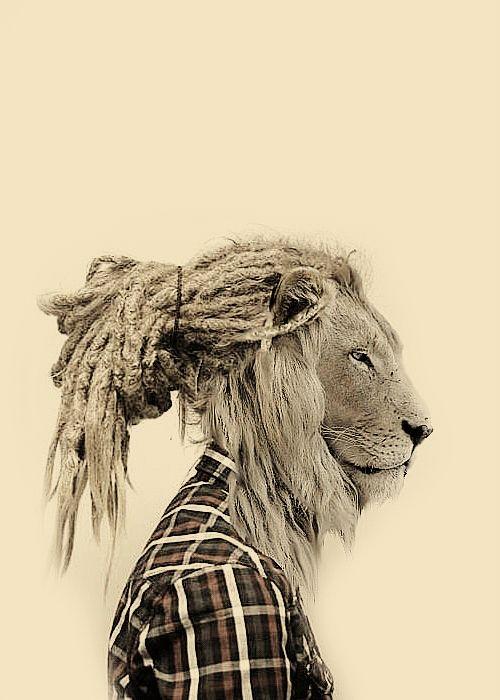 картинки льва с дредами рамках