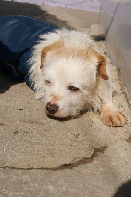 PZ - Adopção de Cão - Cão Rafeiro - Elvis - acolhido(a) por União Zoófila