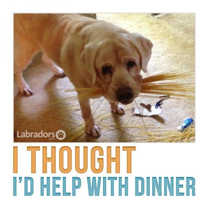 funny labrador -quotes | Found on labradors.com