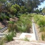 Dunstone Grove Linde Reserve - Stepney Bioretention of stormwater