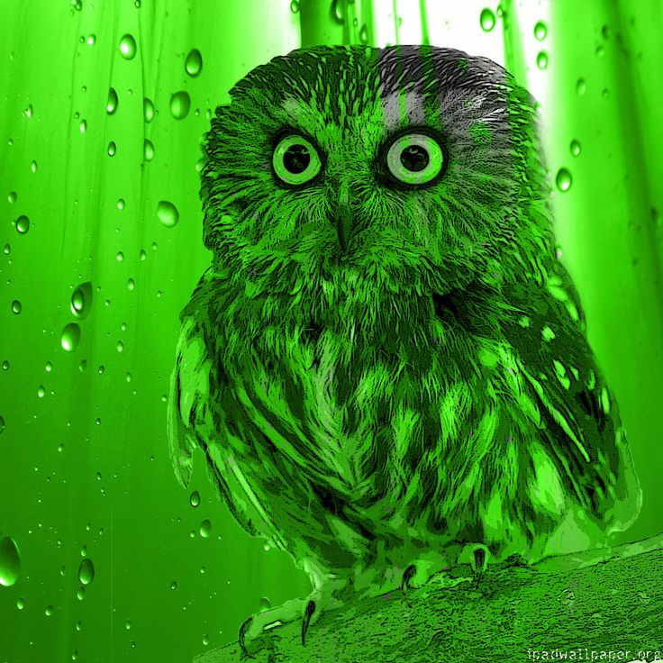 Free Owl Wallpapers: 17 Best Images About Corujas 3D / Fractal On Pinterest