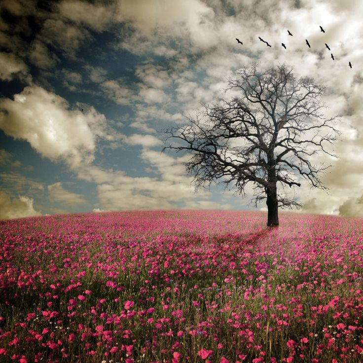 142 Best In A Field Of Flowers Images On Pinterest