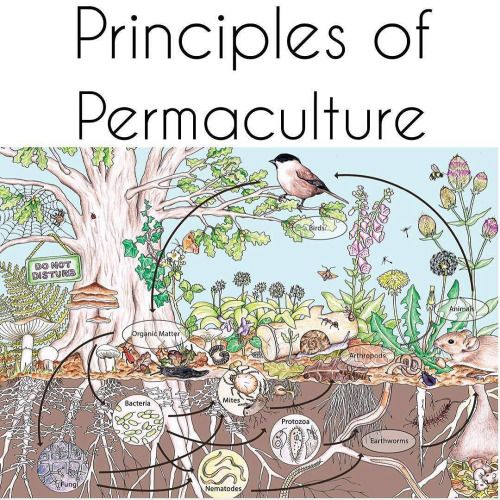 """Permaculture-prowess: """" PART 2, Repost From"""