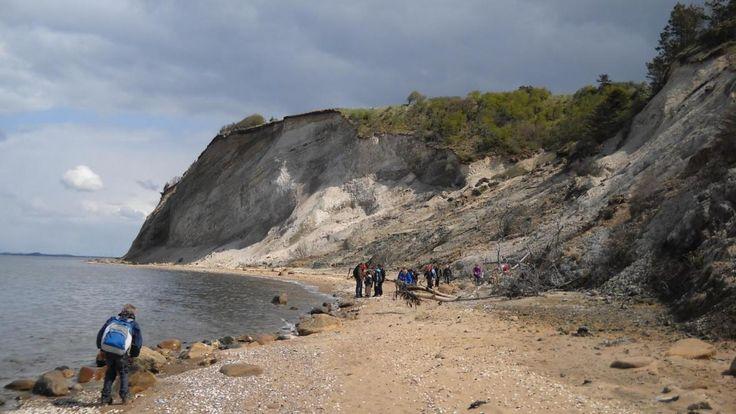 Knudeklinten I Fossiljagt på Fur | VisitSkive