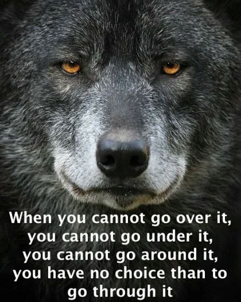 Pin by MoonKat on Native American & Wolf Inspirational