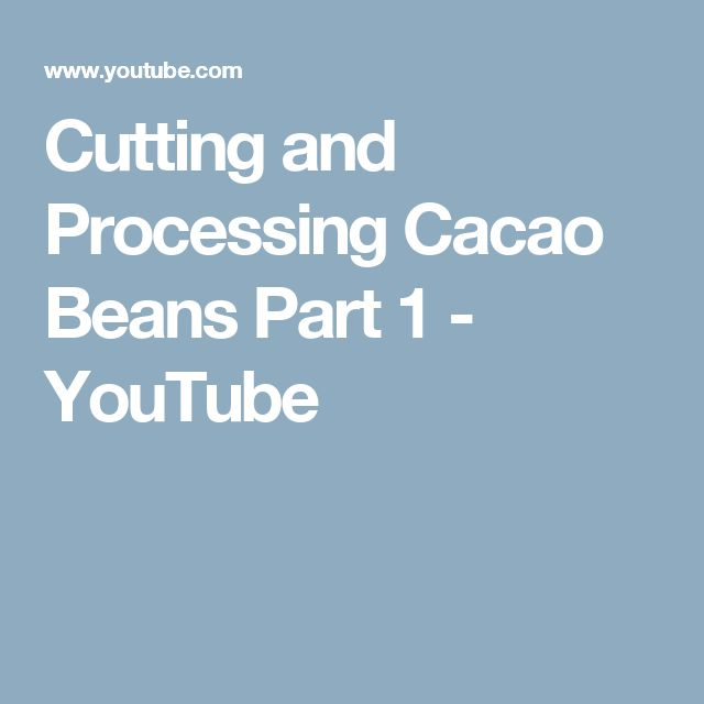 Cutting and Processing Cacao Beans Part 1 - YouTube