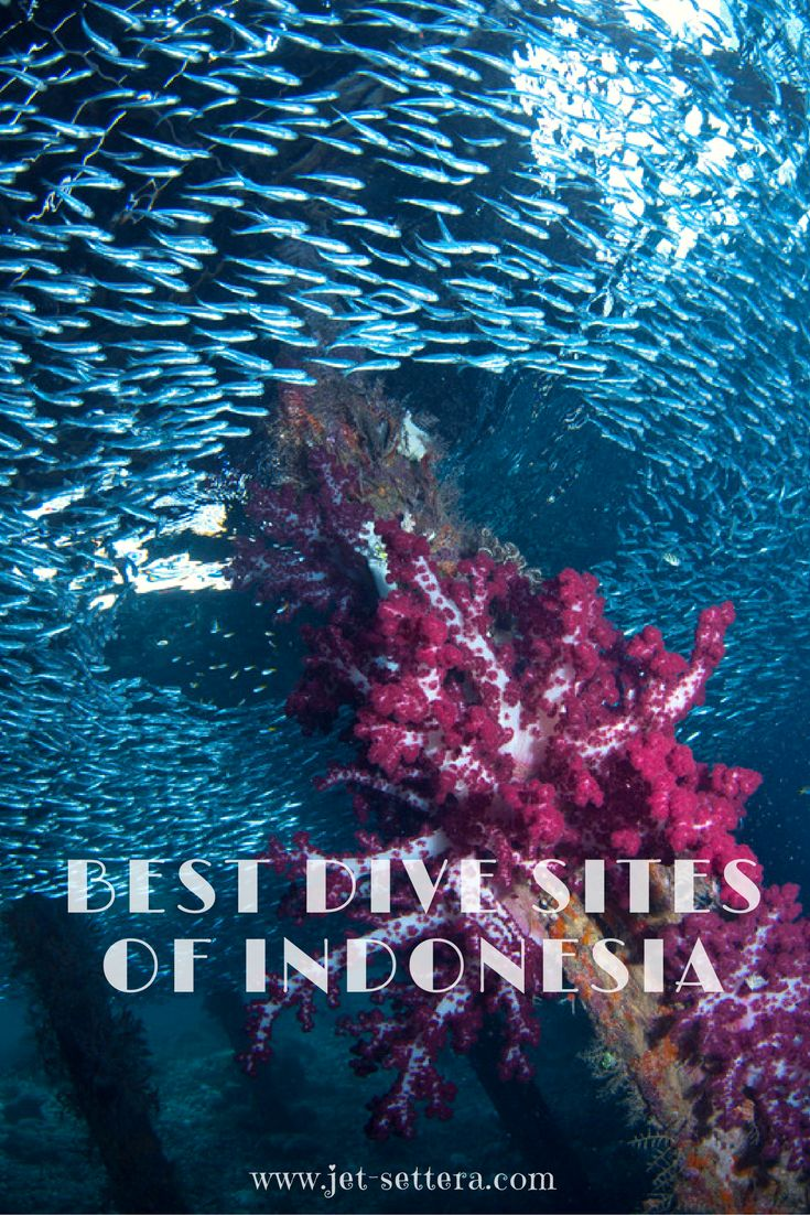 The best scuba diving sites in Indonesia are Tulamben in Bali, Batu Bolong in Komodo Islands, Arborek in Raja Ampat, Nudi Falls in Lembeh and Kal's Dream. via @jetsettera7