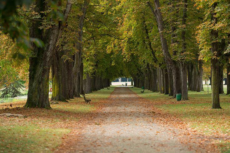 Château de Richelieu. Le parc, 2013. Photo: Alain Mengus.