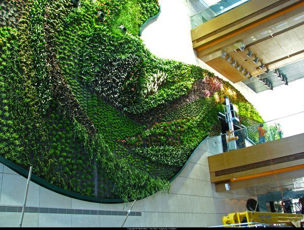 Vertical garden, Patrick Blanc, Mur Végetál, hotels, design, horticulture, botany, botanical, restaurants, architecture, hong kong, paris, Sydney, London, New York, Bali