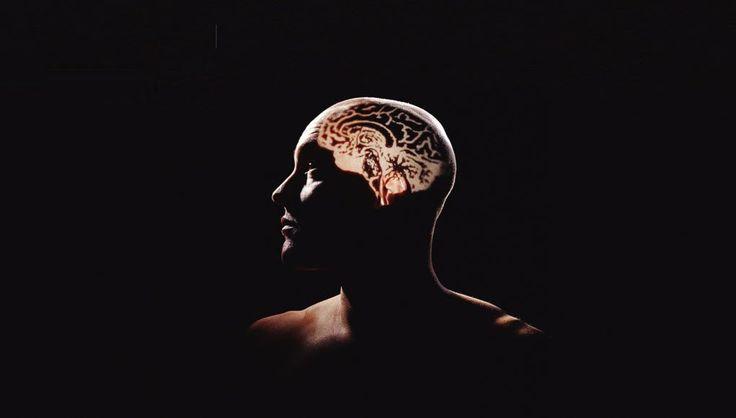 Cómo el cerebro logra fijar los recuerdos de experiencias a largo plazo. 30/11/17