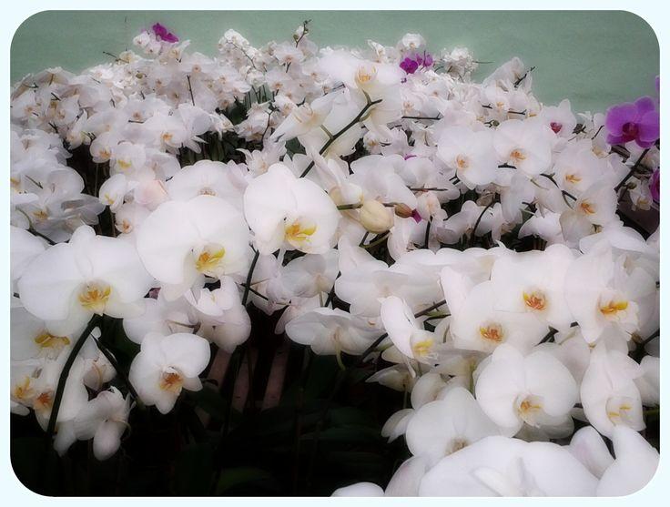 Orquidário Binot
