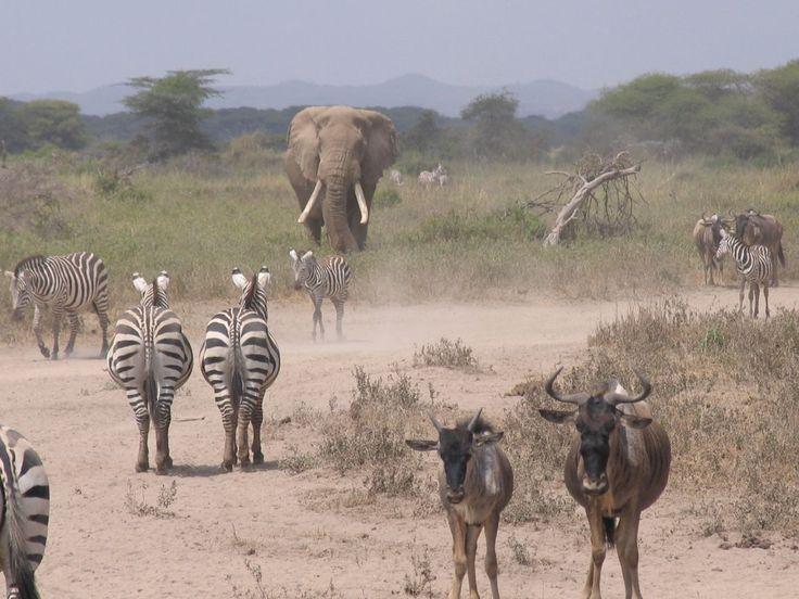 The Animals, czyli Kenia / Kenia and the Animals