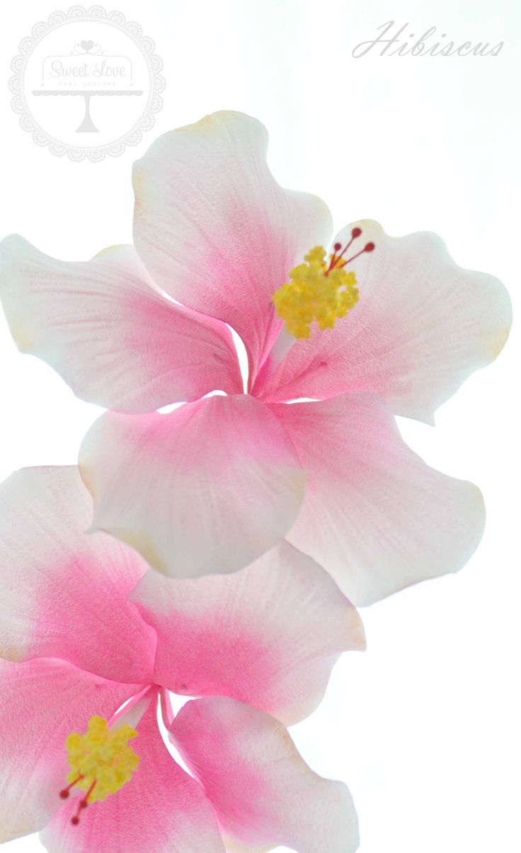 11 best how to make hibiscus flower images on pinterest hibiscus sugar flowers sweet love cake couture coffs harbour wedding cake specialist izmirmasajfo