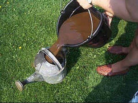 Materiais utilizados: - Recipiente - Terra de compostagem (pode ser terra vegetal, húmus...) - Água (utilizar água de chuva, se possível) Misturar tudo e dei...