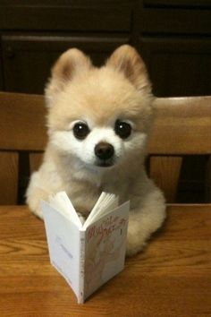 Image result for puppy reading a book