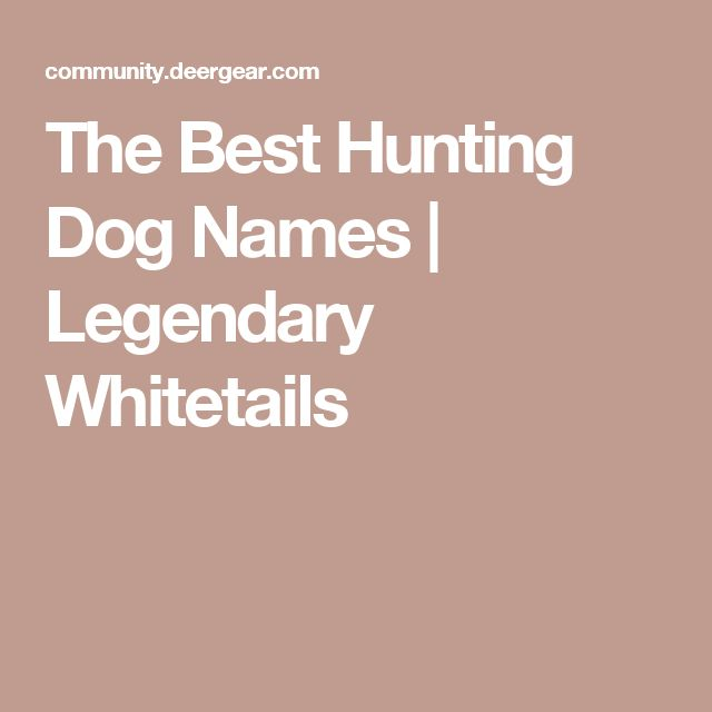The Best Hunting Dog Names