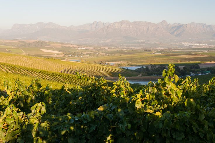 The view into the Stellenbosch Kloof Valley