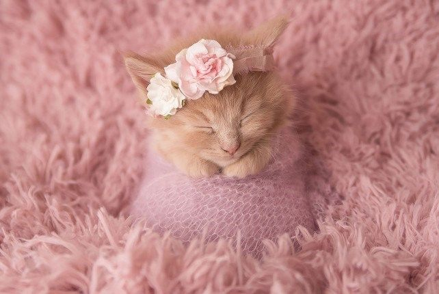 This Adorable Newborn Kitten Photoshoot Is Just Purr-fect