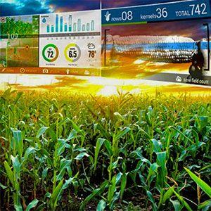 El dispositivo de visualización de realidad aumentada Google Glass para aplicaciones agrícolas, facilita la comprobación y recogida de datos de los cultivos mediante fotografías, notas o vídeos y permite enviar al instante dicha información por correo electrónico, sin salir de la explotación.