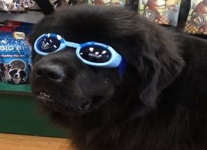 Doggles!   Help protect your furry friends eyes this summer! Sizes: X-small, Small, Medium, Large