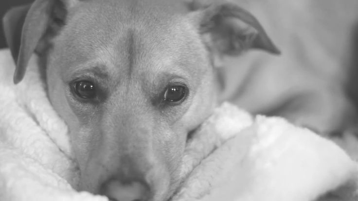 Sad Dog - Free Stock Video - License: CC0 Public Domain (Free for commercial use No attribution required) Sad Dog - Free Stock Footage