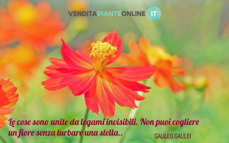http://bit.ly/1kpi3yo #venditapianteonline # aforismi #pianteefiori #garden #gardening #flowers #landscaping