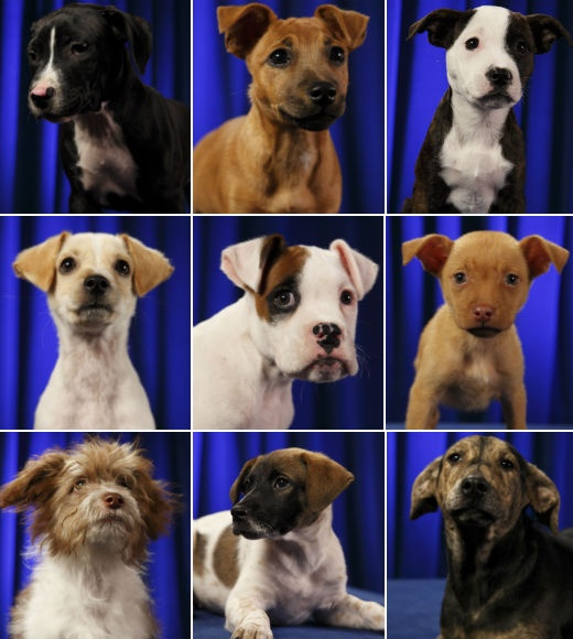 Puppy Bowl VIII 2012 starting lineup: http://bit.ly/ysEhHZ