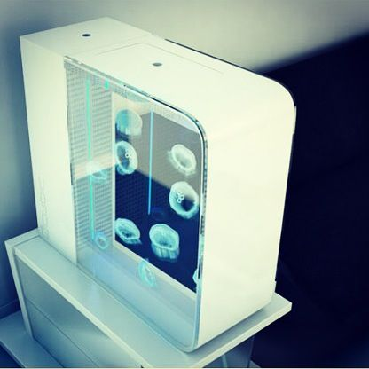 Cubic pulse 80 jellyfish tank available from petjellyfish for Aquarium 80 litres