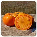 Organic Yellow Brandywine Tomato