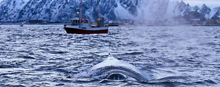 Amazing Winter - Amazing Andøy