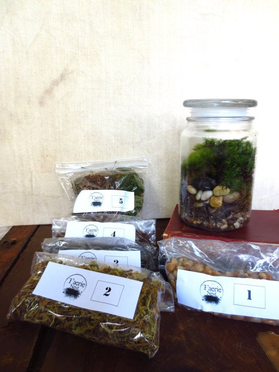 Large Moss Terrarium Kit with Jar DIY Terrarium by FaerieNest, $26.00