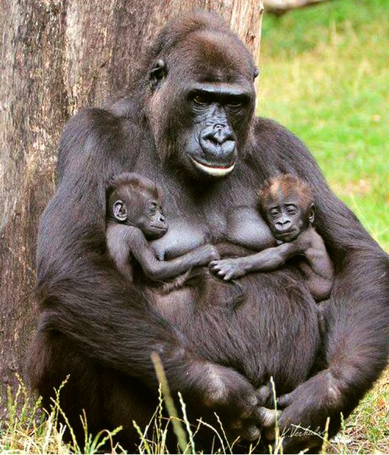 Double gorilla hugs.