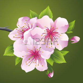 Japon kiraz ağacı Sakura pembe çiçek açması dalı. Yeşil zemin üzerine izole güzel kiraz çiçeği,. Şık çiçekli duvar kağıdı. Vector illustration photo