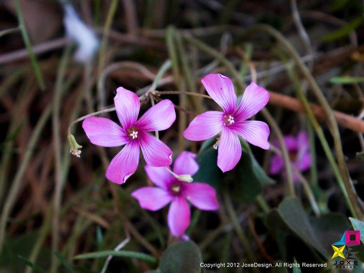 Fotografías tomadas en terreno al aire libre en un día de primavera.