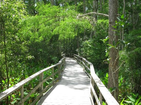 The trail in Corkscrew Swamp outside of Naples, Florida.  Great place for a day trip if you are in that area!