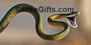 Visit SnakeGifts.com for more awesome snake photos