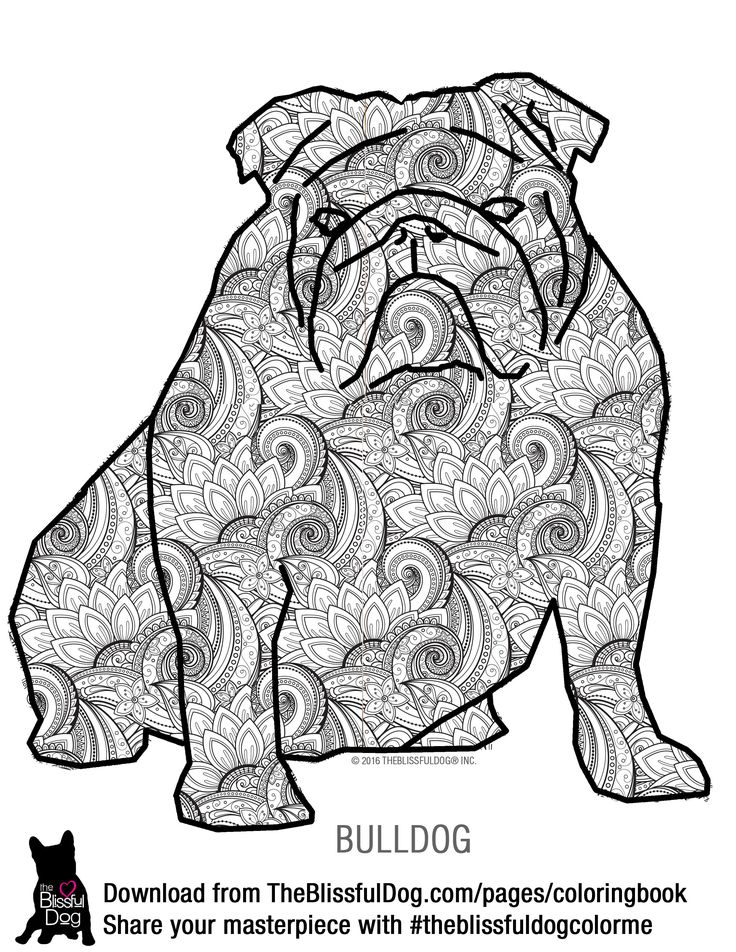 Here Is The Bulldog Coloring Book Page